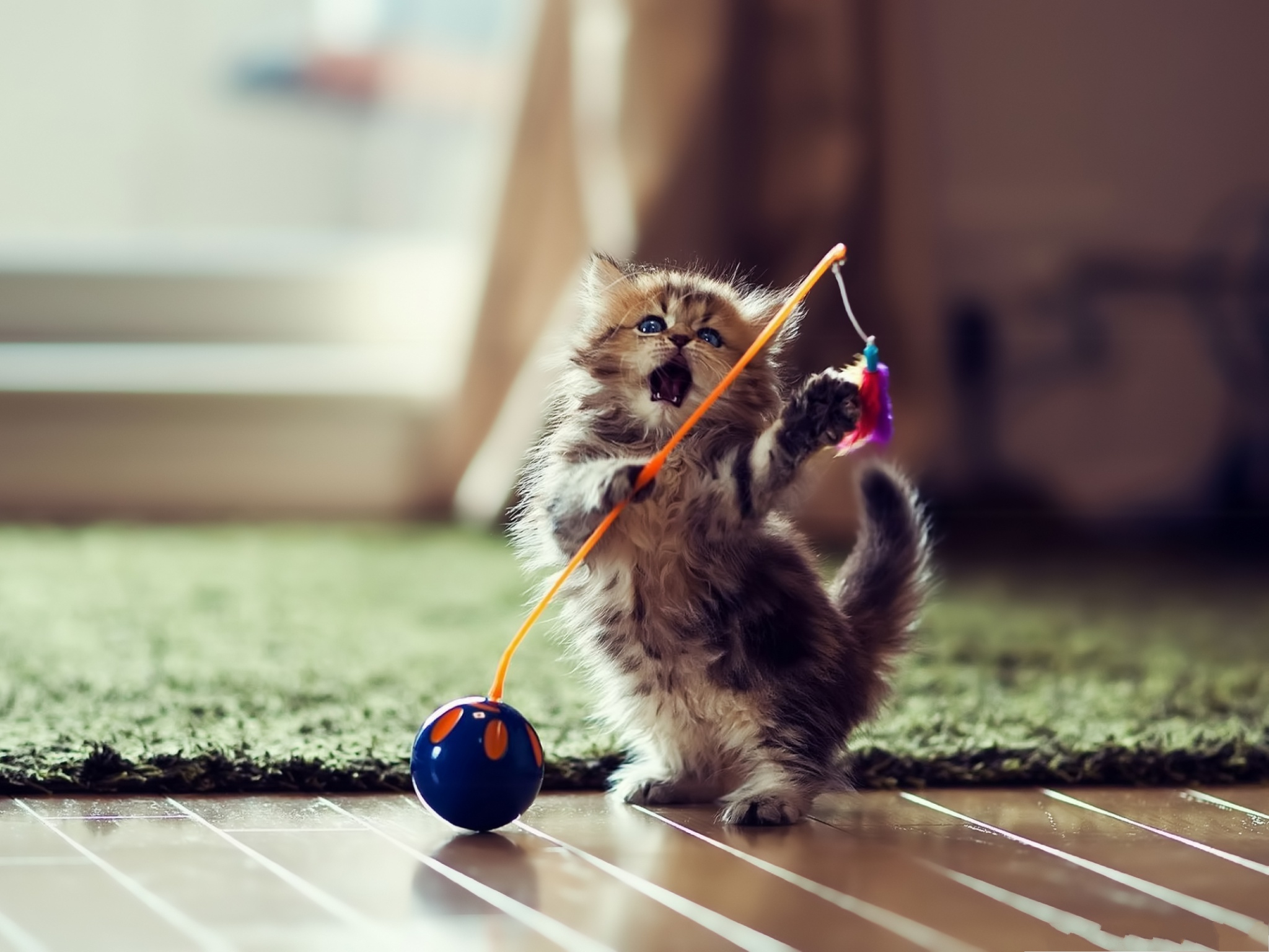 click to free download the wallpaper--Funny Cat Photos, Cute Kitten Standing Up, What a Dancer! 2048X1536 free wallpaper download