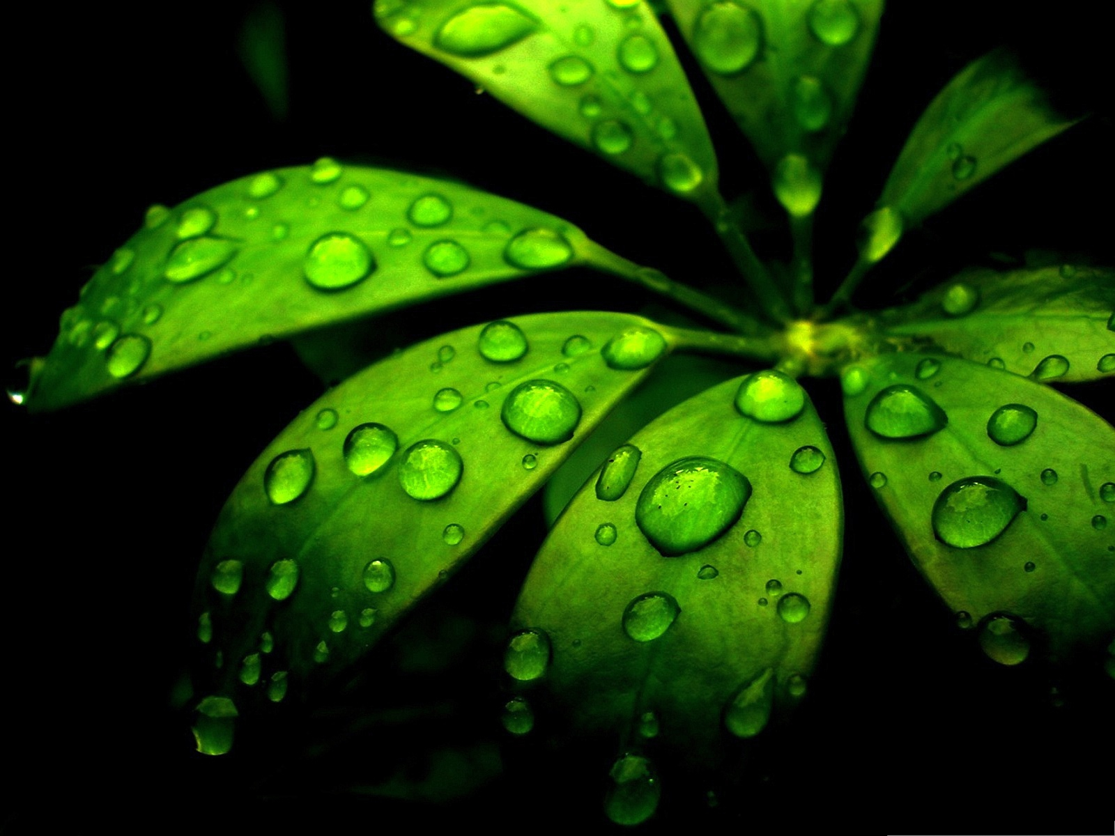 click to free download the wallpaper--Green Flower Photos, Morning Dew on Green Plants, Crystal Clear Waterdrops 1600X1200 free wallpaper download