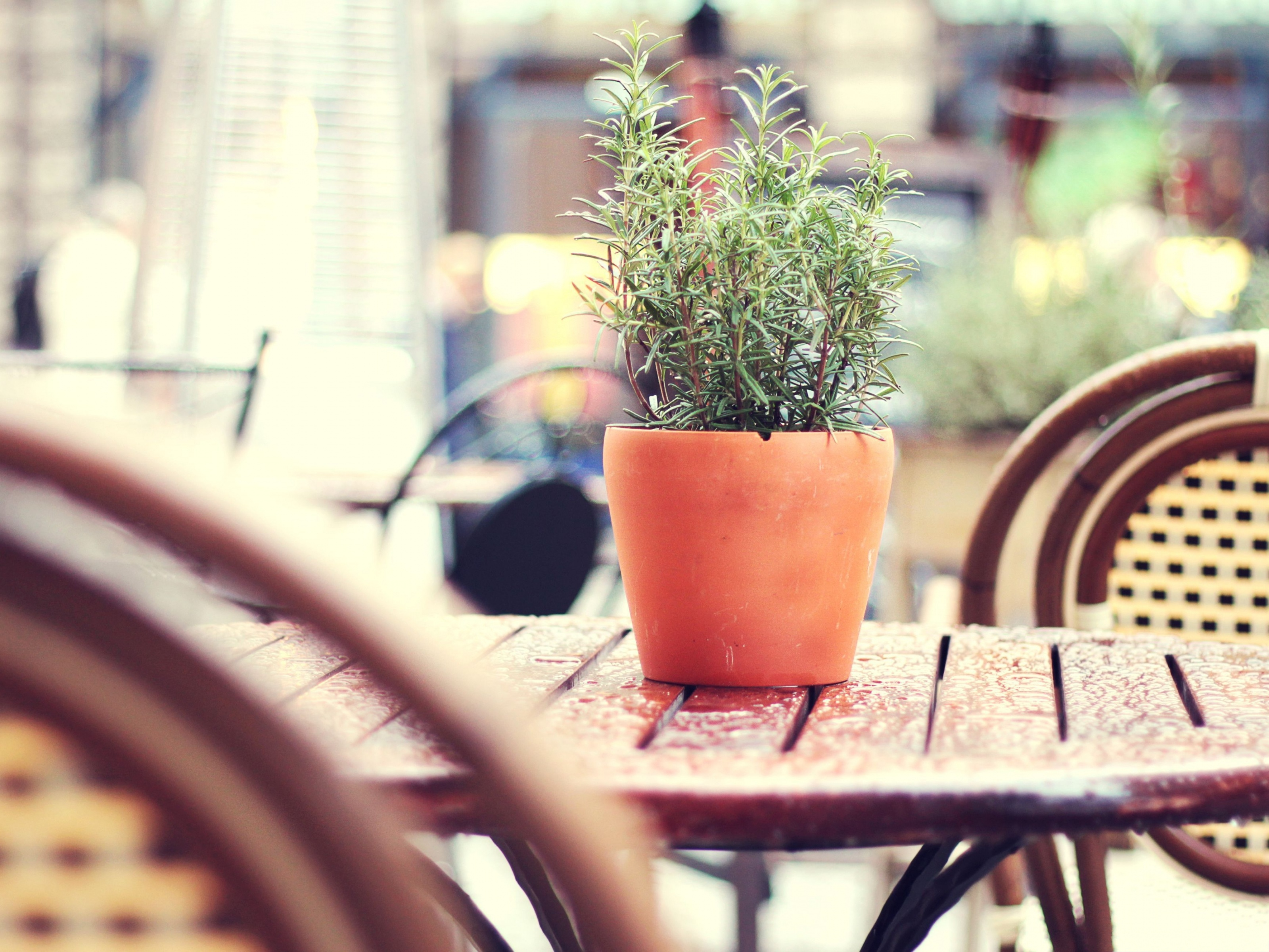 click to free download the wallpaper--Green Plant Outdoor, Plant on a Cafe Table, Fresh Air for the Customer 3200X2400 free wallpaper download