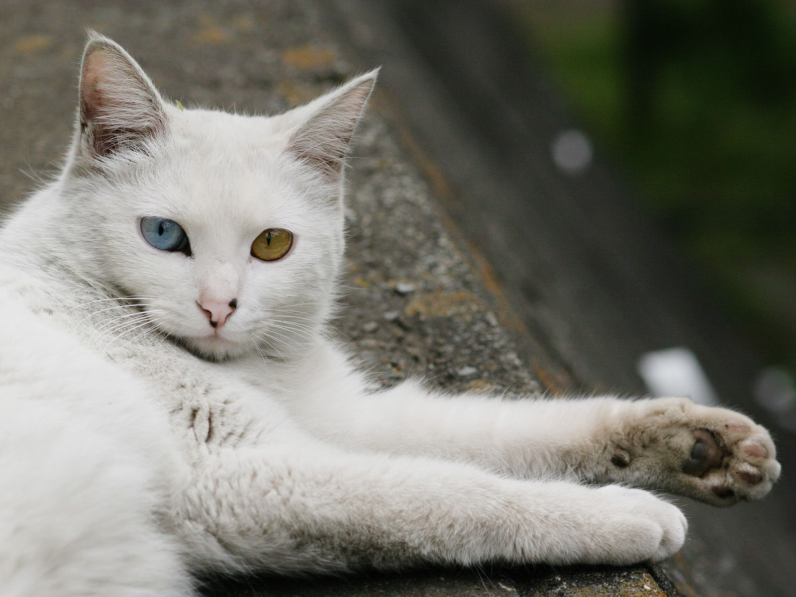 Homeless City Cat Image Eyes In Blue And Yellow White
