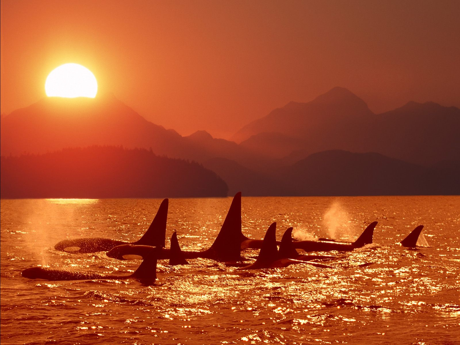 click to free download the wallpaper--Image of Nature Landscape, the Setting Sun, Sharks in Free Swim, High Mountains 1600X1200 free wallpaper download