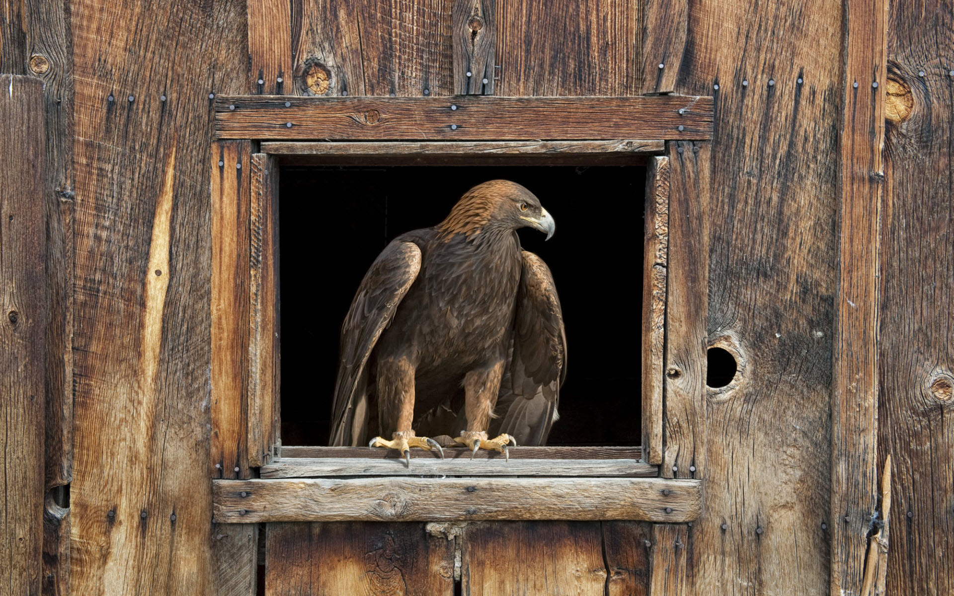 click to free download the wallpaper--Images of Animals - Barn Eagle Post in Pixel of 1920x1200, the Eagle Left Alone, It is Cool and Stony 1920X1200 free wallpaper download