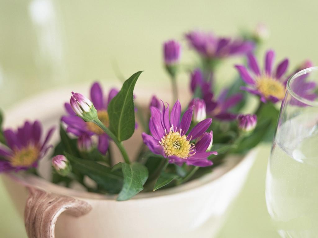 beautiful flowers wallpapers hd free download