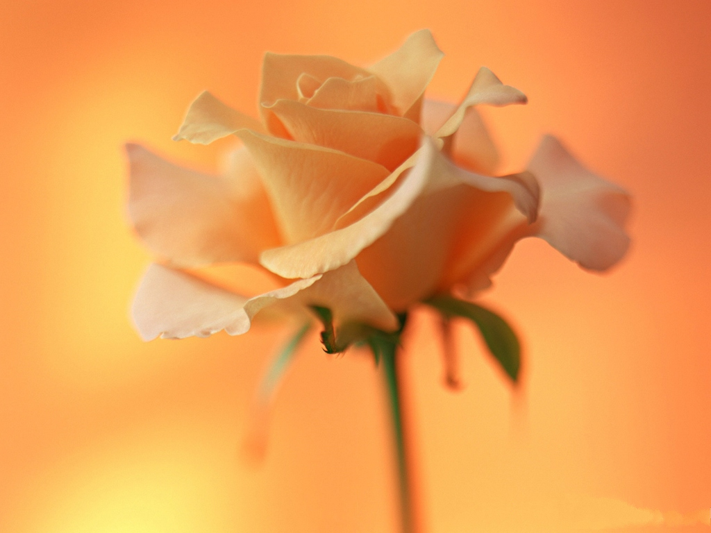 http://74211.com/wallpaper/picture_big/Images-of-Flower-Art-Orange-Blooming-Flower-Cozy-and-Romantic-Scene.jpg