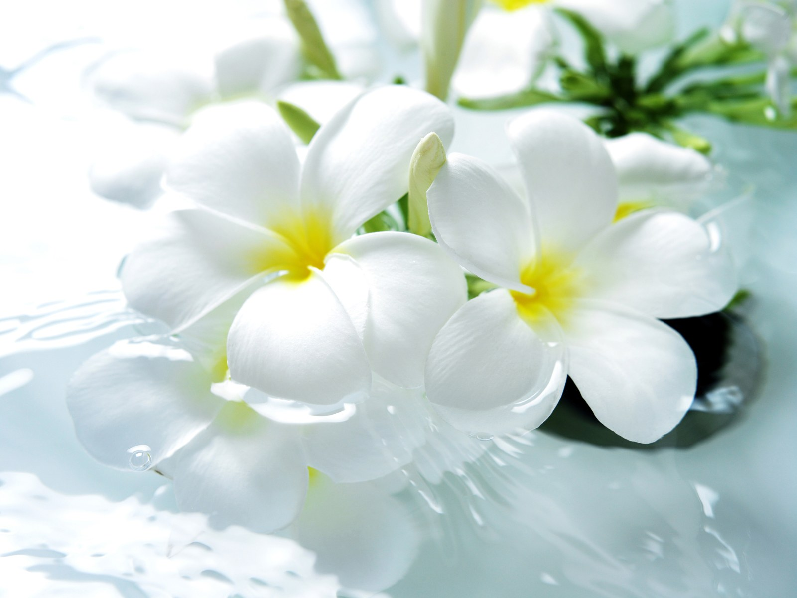 images of white flower bathroom charm clean and pure