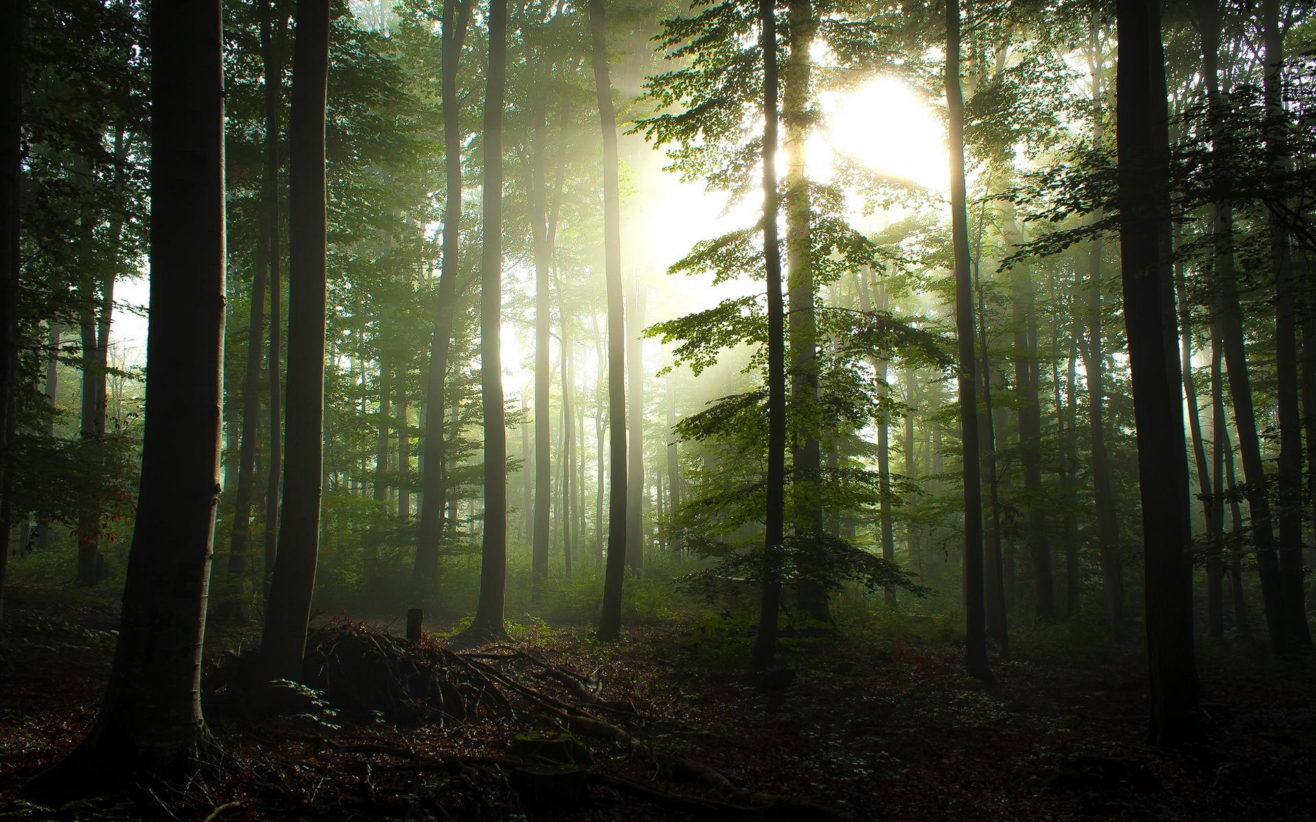 sunlight through trees black - photo #45