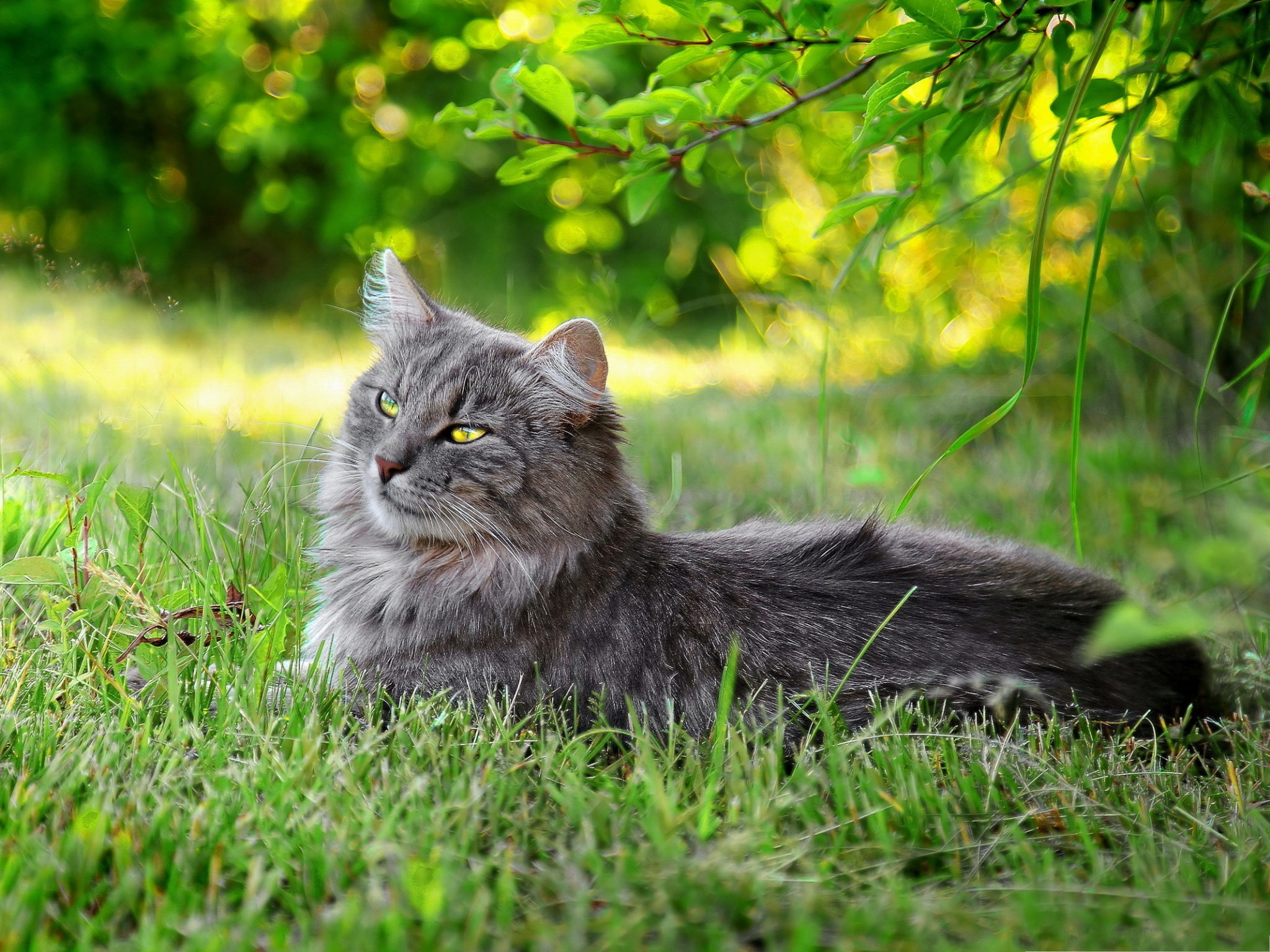 click to free download the wallpaper--Lazy Cat Image, Kitten Lying Under Green Tree, Unwilling to Move 2048X1536 free wallpaper download