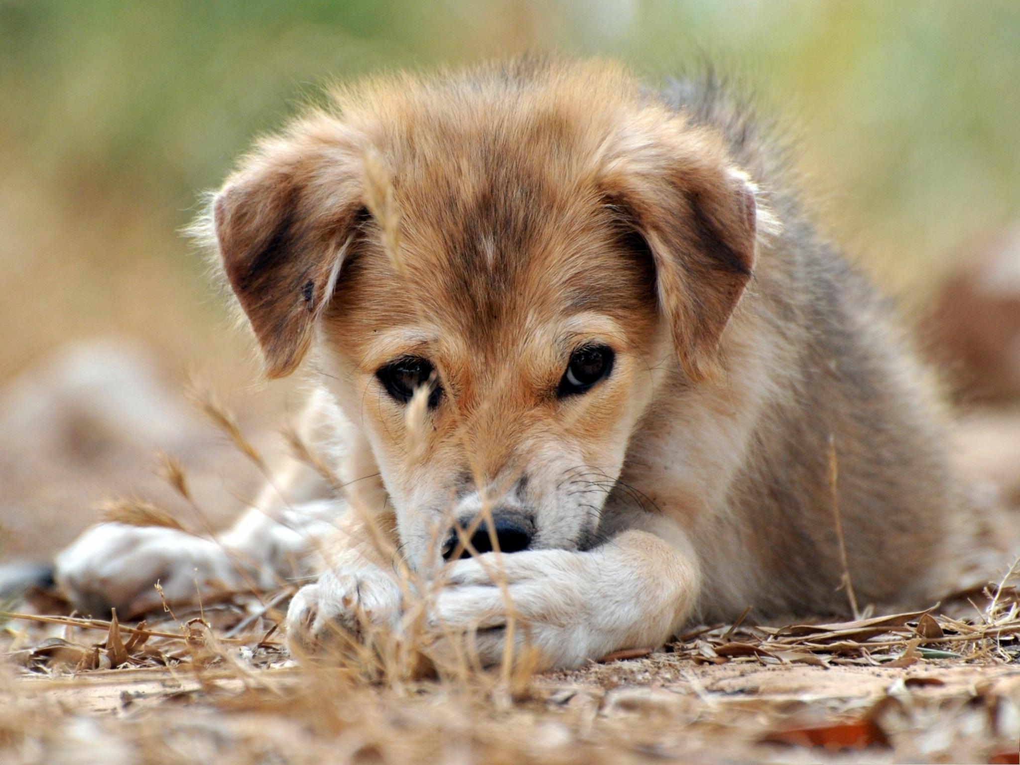 download wallpaper dog little - photo #40