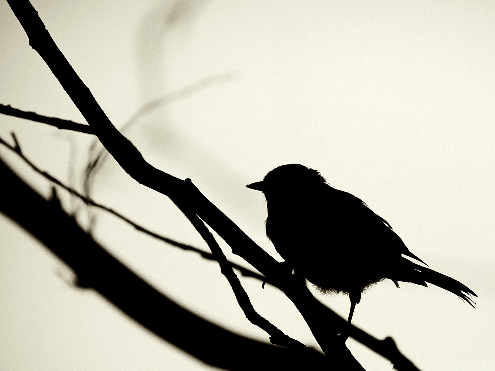 Lonely Bird Silhouette, Small Bird Standing on Branch ...