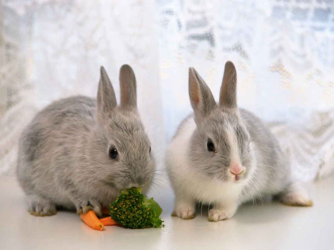 click to free download the wallpaper--Lovely Animals Post, Cute Bunnies in Eating, Shall Stay by Your Side 1152X864 free wallpaper download