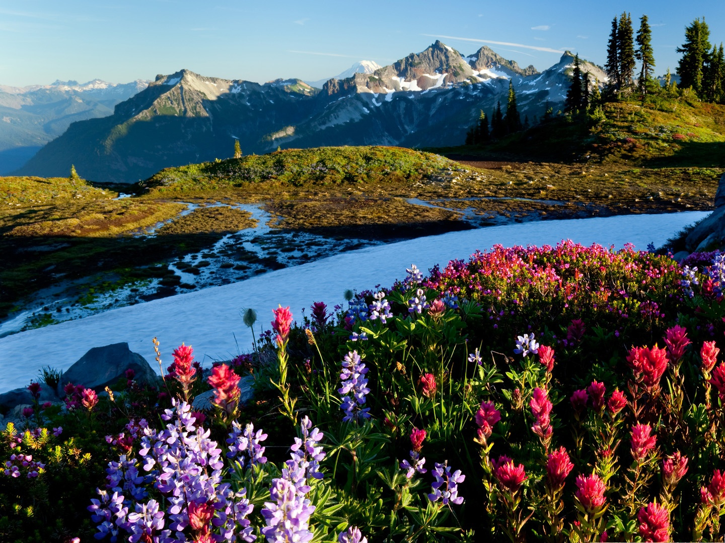 click to free download the wallpaper--Mountain Flowers Picture, Colorful Blooming Flower on Hillside, Under the Blue Sky 1440X1080 free wallpaper download