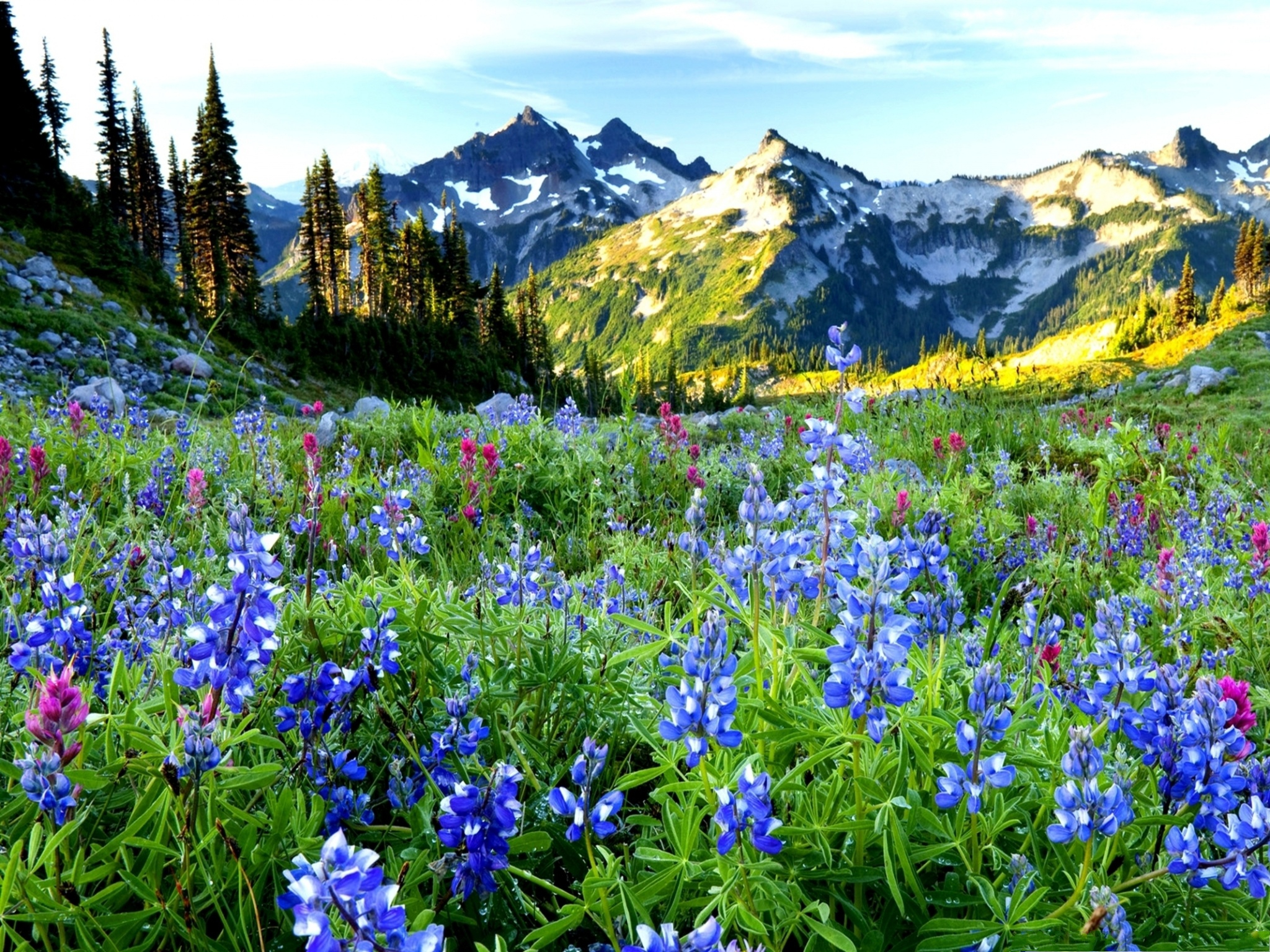 click to free download the wallpaper--Mountain Flowers Picture, Little Beautiful Flowers at the Feet of the Hill, Flower Field 2048X1536 free wallpaper download
