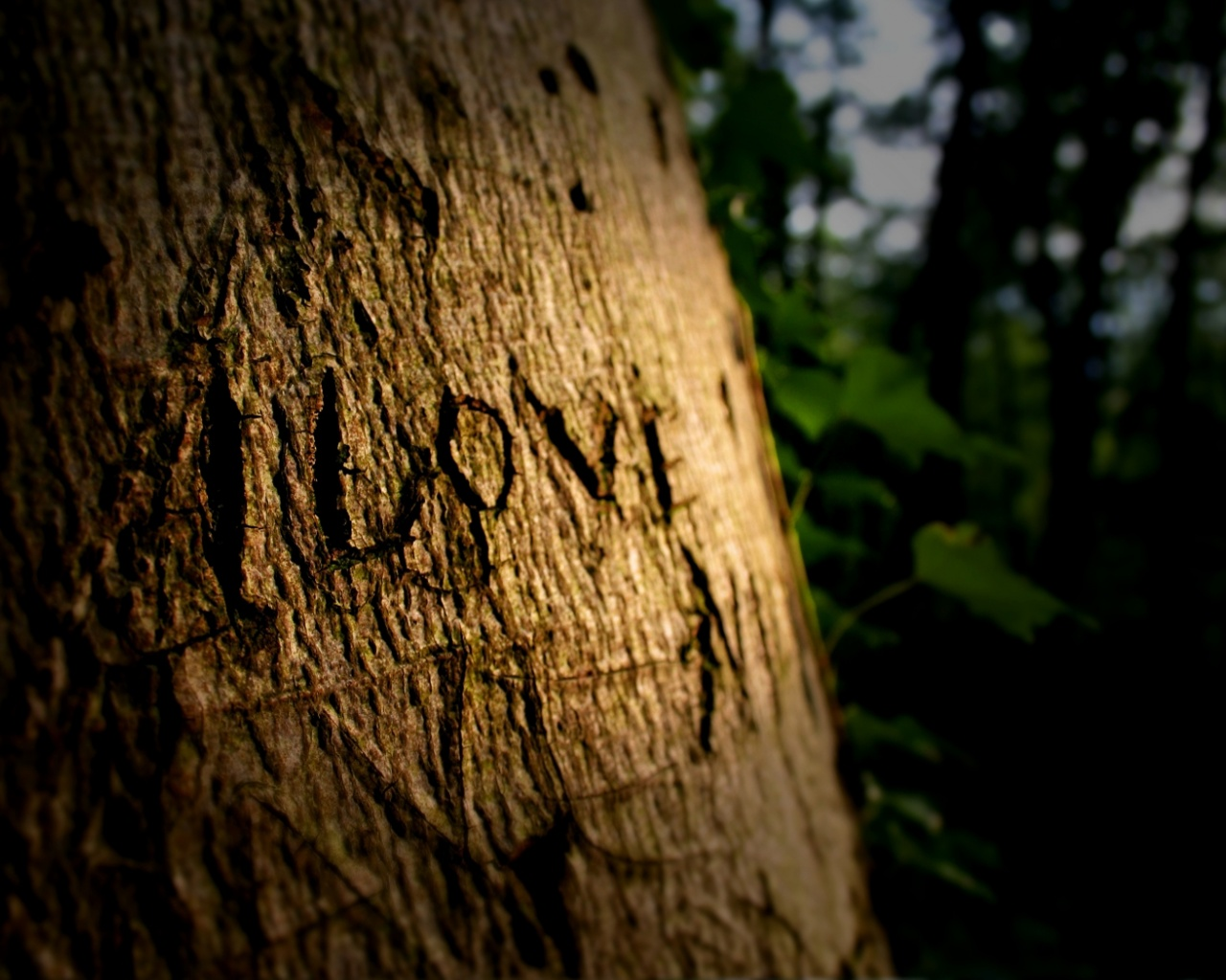 click to free download the wallpaper--Natural Landscape Image, Love on Tree, Shall Be Here for Hundreds of Years