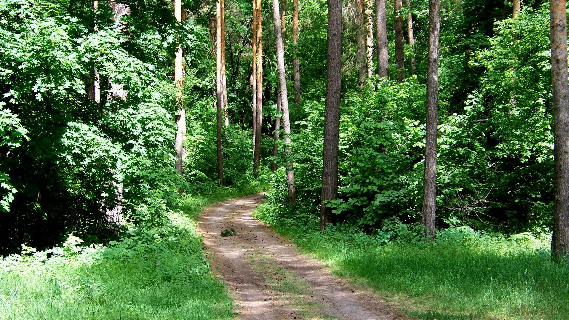 click to free download the wallpaper--Natural Scenery images - A Narrow and Earthy Road in the Middle of the Forest, Amazing Walking Experience 1920X1080 free wallpaper download