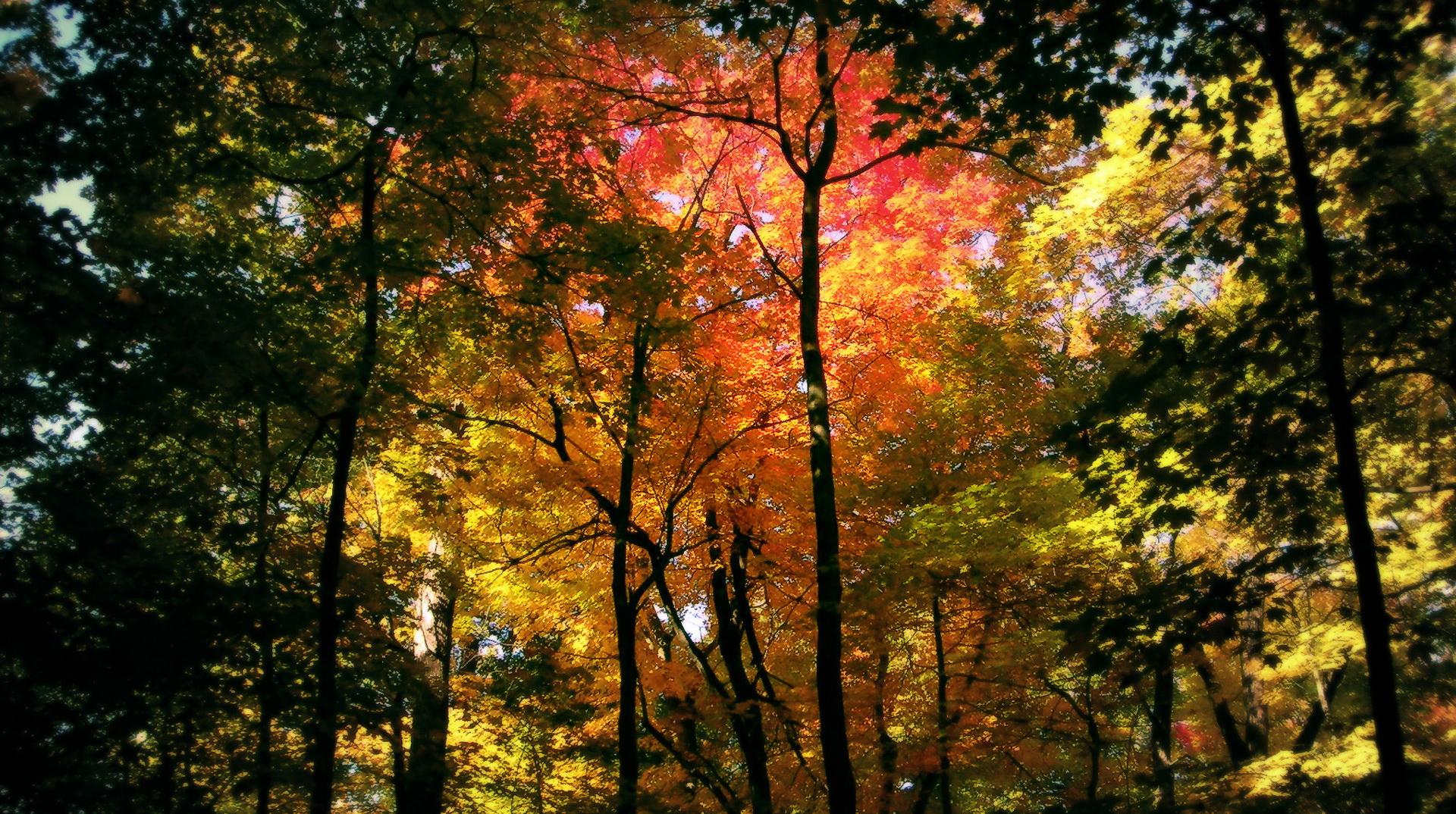Natural Images Free Download
