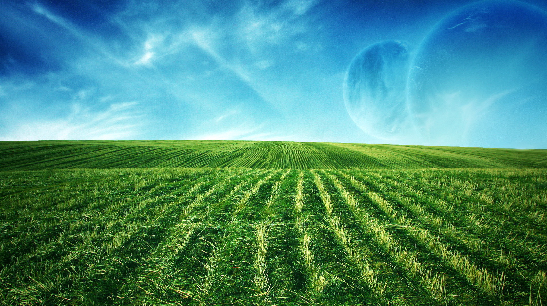 click to free download the wallpaper--Natural Scenery picture - An Endless Field of Green Wheats, the Blue Sky, is an Impressive Scene 1920X1080 free wallpaper download