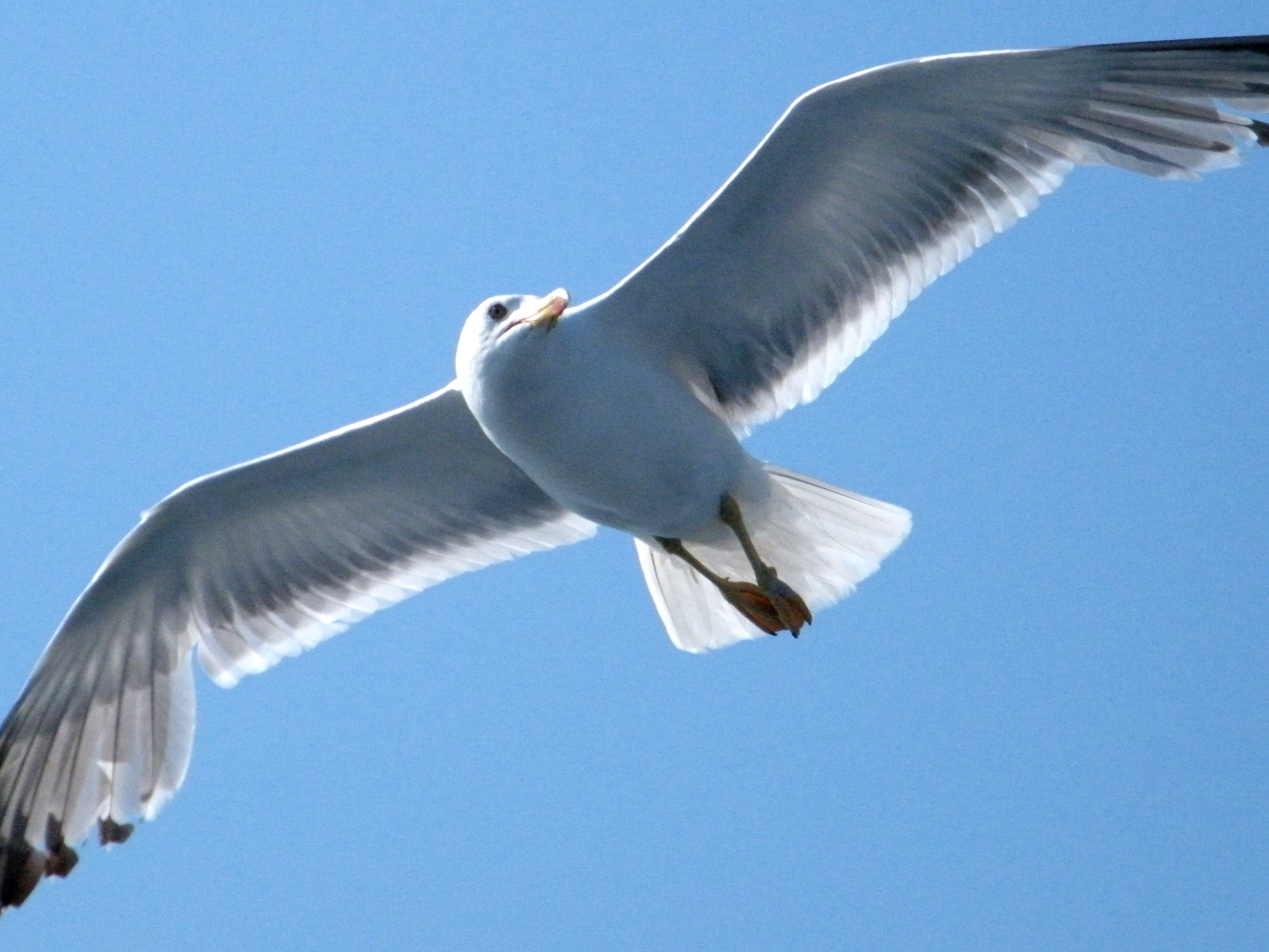 click to free download the wallpaper--Nature Landscape Image, Seagull Flying, a Cool Guy in Fast Speed, Fishes, Take Care!