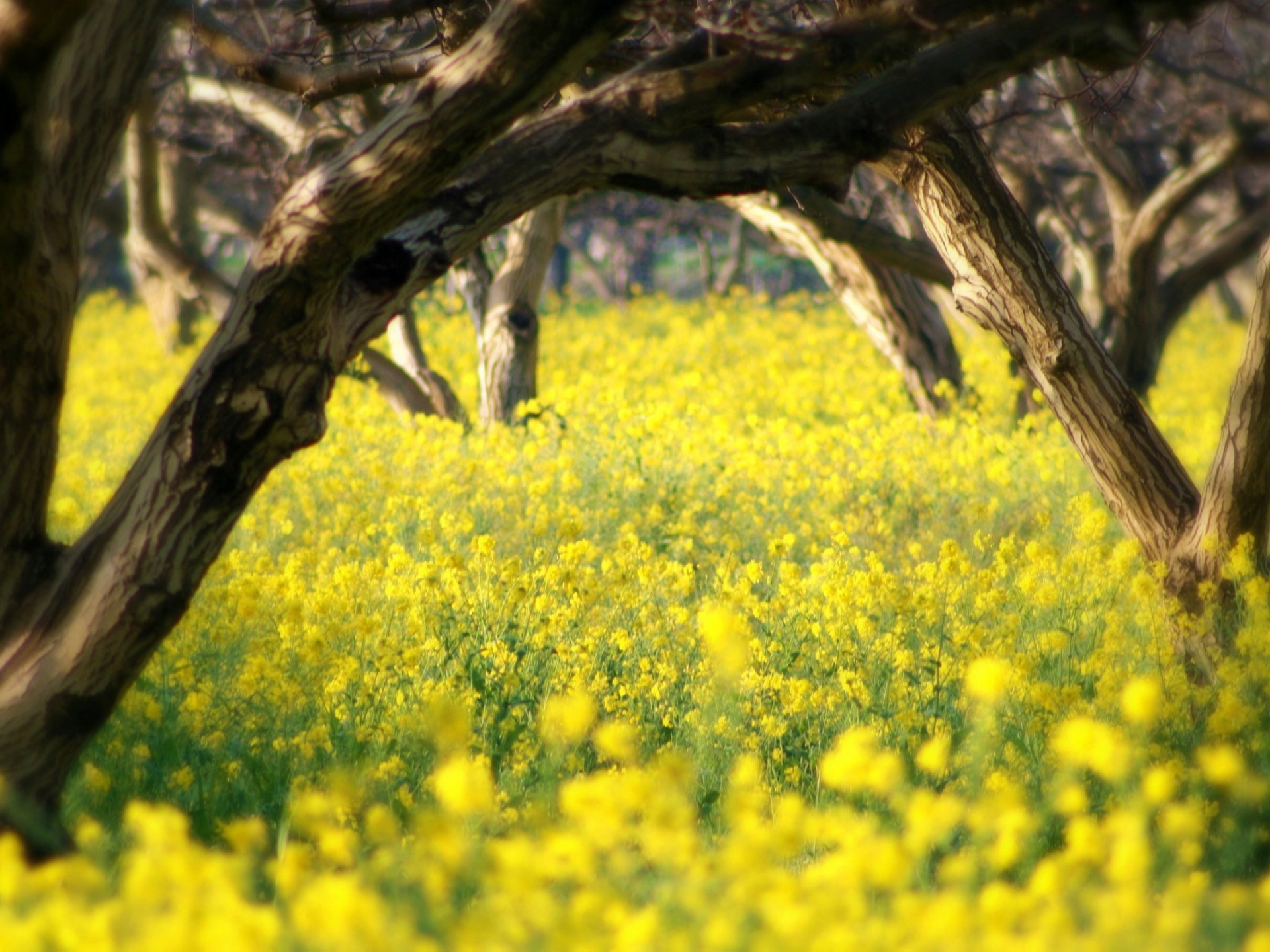 Nature Landscape Image Yellow Little Flowers The Brown