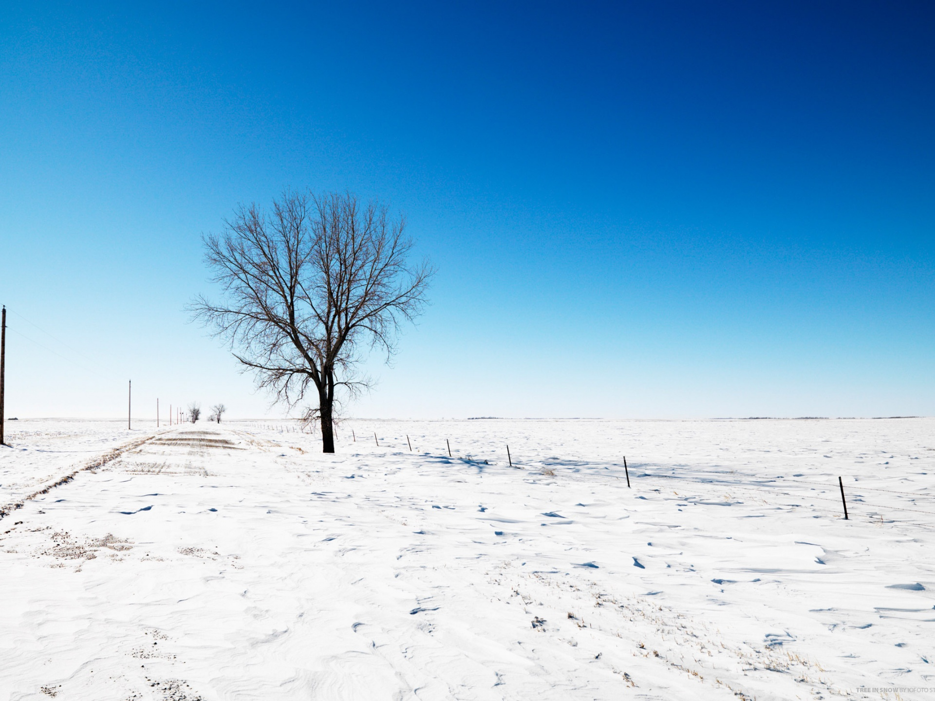 click to free download the wallpaper--Nature Landscape Pic, a Tree on Snow Road, the Blue Sky, Incredible Look