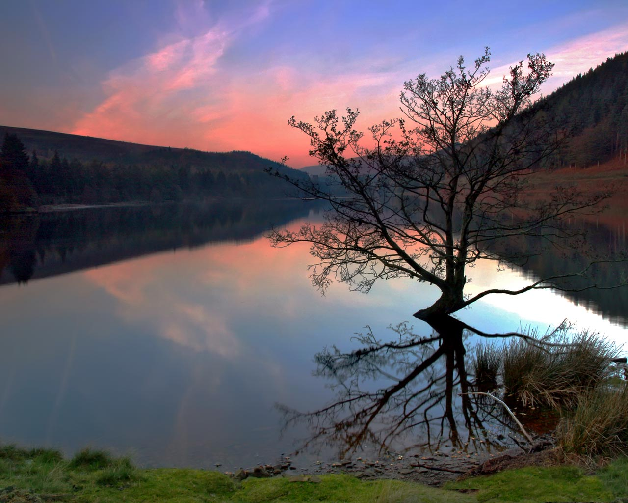 click to free download the wallpaper--Nature Landscape Wallpaper, Ladybower Lake Under the Pink Sky, a Tall Black Tree on the Surface