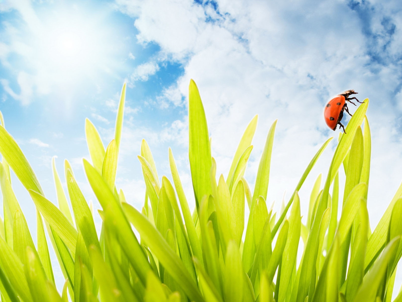 click to free download the wallpaper--Nature Landscape with Animals, a Ladybug on Grass, the Blue Sky, Combine an Incredible Scene
