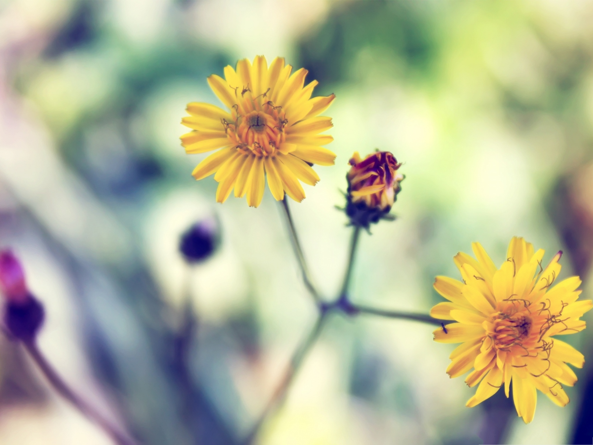click to free download the wallpaper--Nature Landscape with Flowers, Yellow Blooming Flowers, Be Optimistic! 2048X1536 free wallpaper download