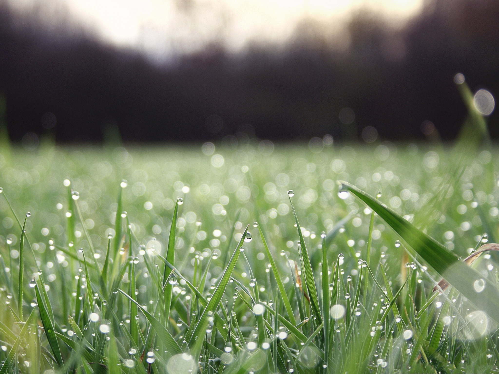 click to free download the wallpaper--Nature and Plants, Rain Drops on Green Grass, Great Morning Scene 2048X1536 free wallpaper download