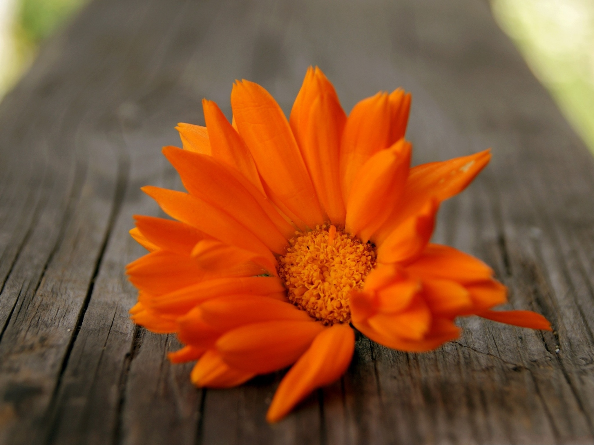 showing posts  media for pretty orange wallpaper, Beautiful flower