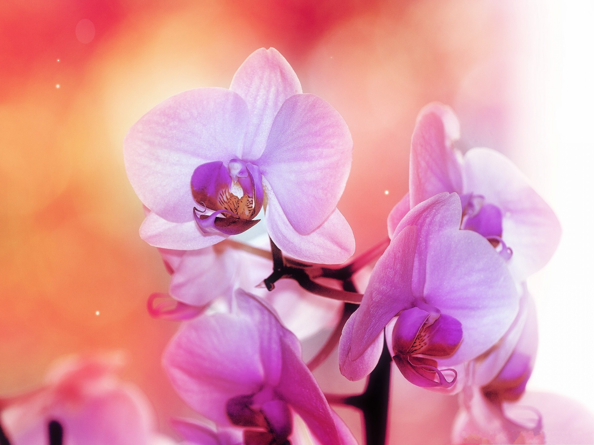 click to free download the wallpaper--Orchid Flowers Pic, Pink Tiny Flowers on Orange Background 2048X1536 free wallpaper download