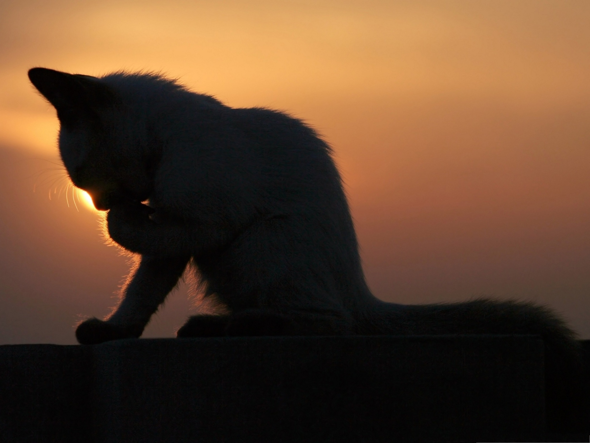 click to free download the wallpaper--Photos of Cute Cat, Lovely Cat in the Sunset, Doing Cleaning 2048X1536 free wallpaper download