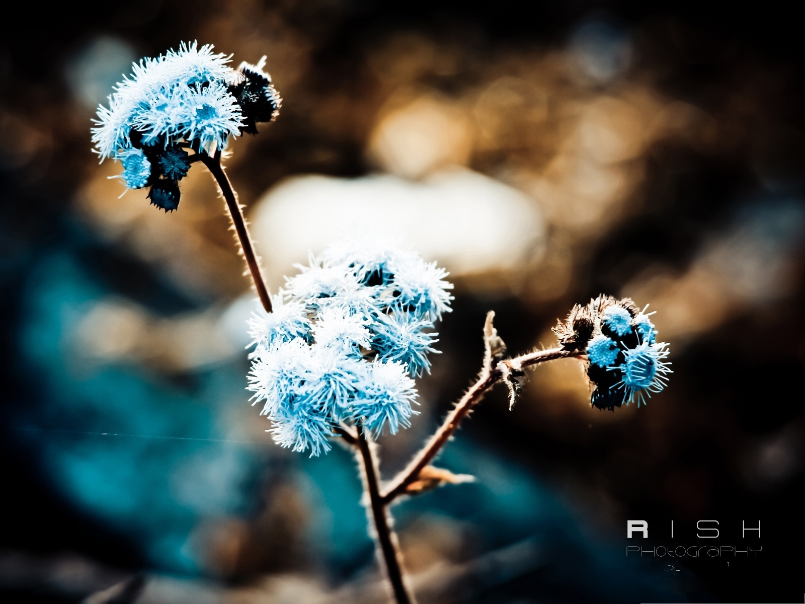 click to free download the wallpaper--Photos of Nature Landscape, Winter Flowers Covered with Snow, Be Tough and Survive 1600X1200 free wallpaper download