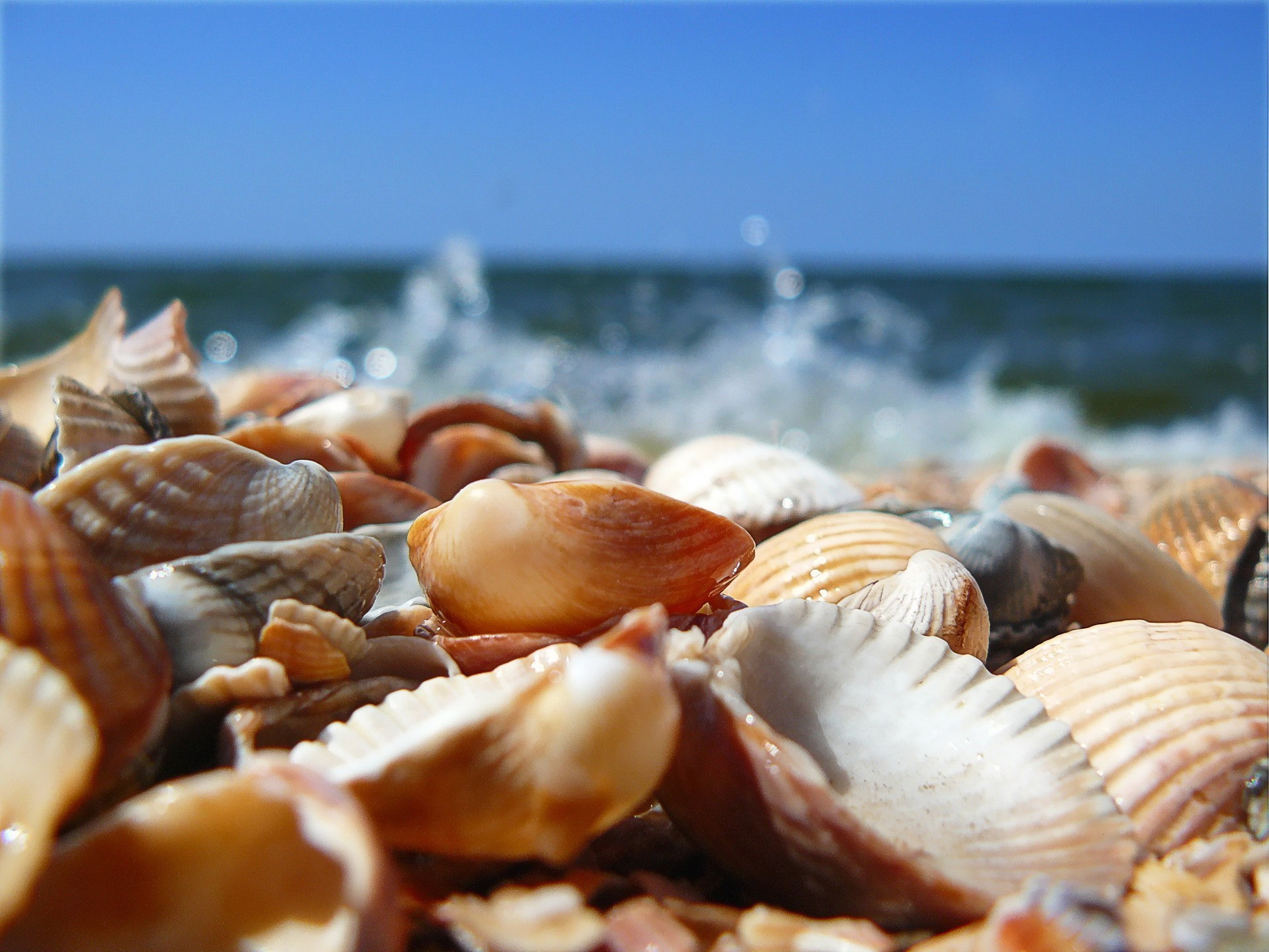 click to free download the wallpaper--Pic of Nature Landscape, Sea Shells Under the Blue Sky, Freshly Picked from the Sea