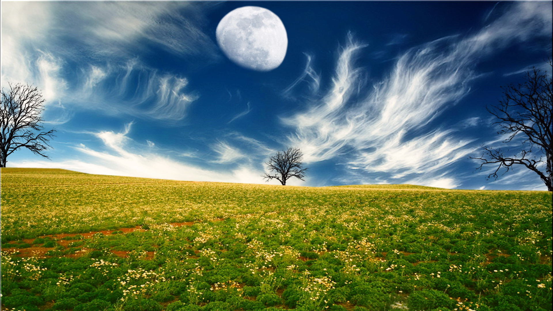 click to free download the wallpaper--Pics of Flower Scene - Yellow and Blooming Flowers, the Lighted Up Sky and the Rising Moon, Time for a Sleep  1920X1080 free wallpaper download
