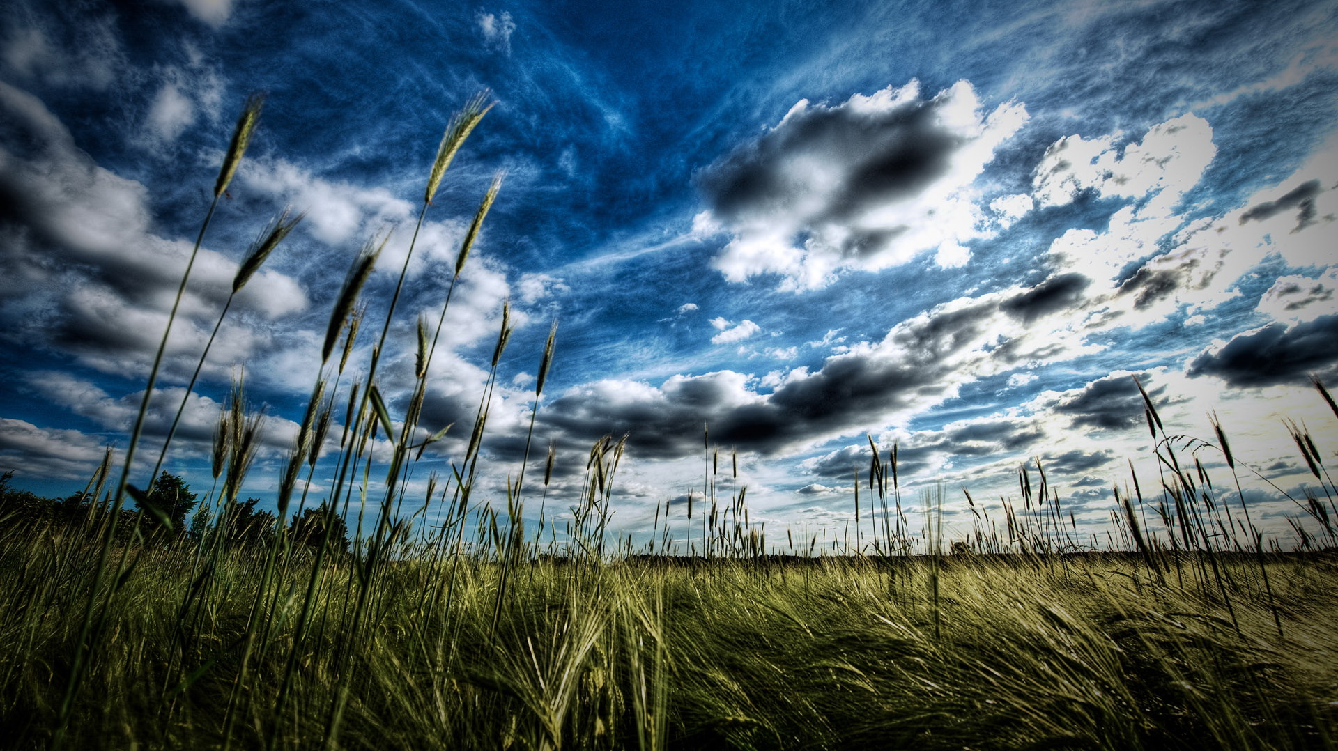 click to free download the wallpaper--Pics of Natural Scene - The Blue Sky with White Clouds, Green Grass Beneath, an Amazing Scene 1920X1080 free wallpaper download