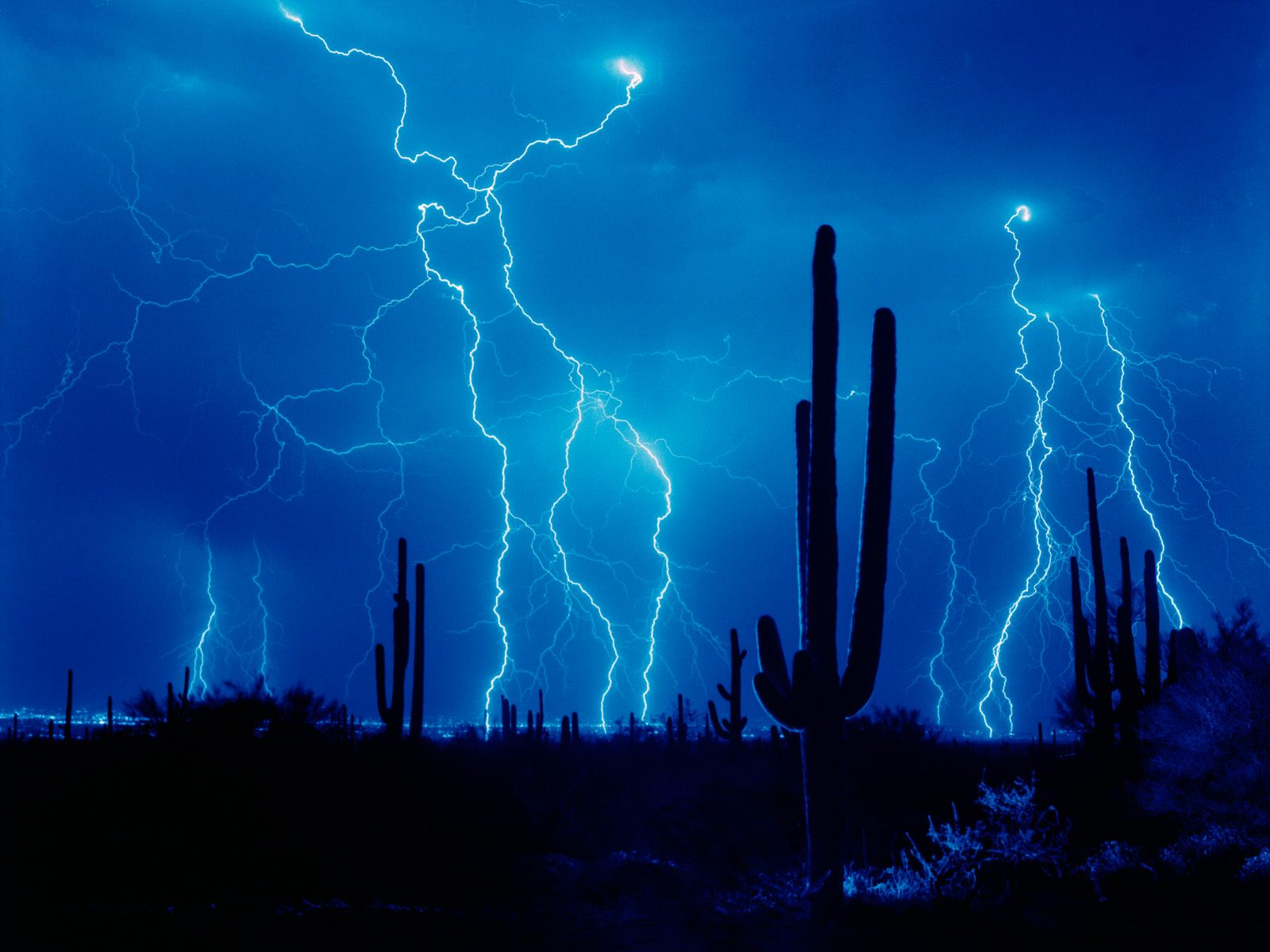 click to free download the wallpaper--Pics of Nature Landscape, Cactus Under the Blue Sky and Lightning, Tough and Brave