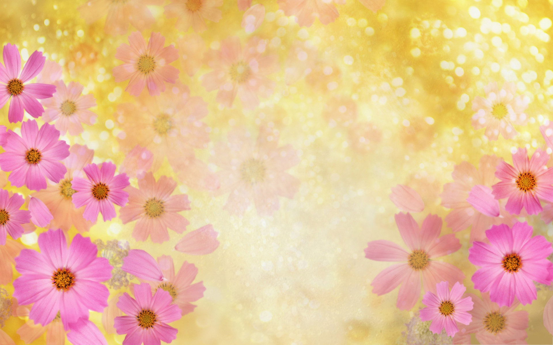 click to free download the wallpaper--Pink Flowers Picture, Beautiful Flowers in Bloom, Golden Background 1920X1200 free wallpaper download