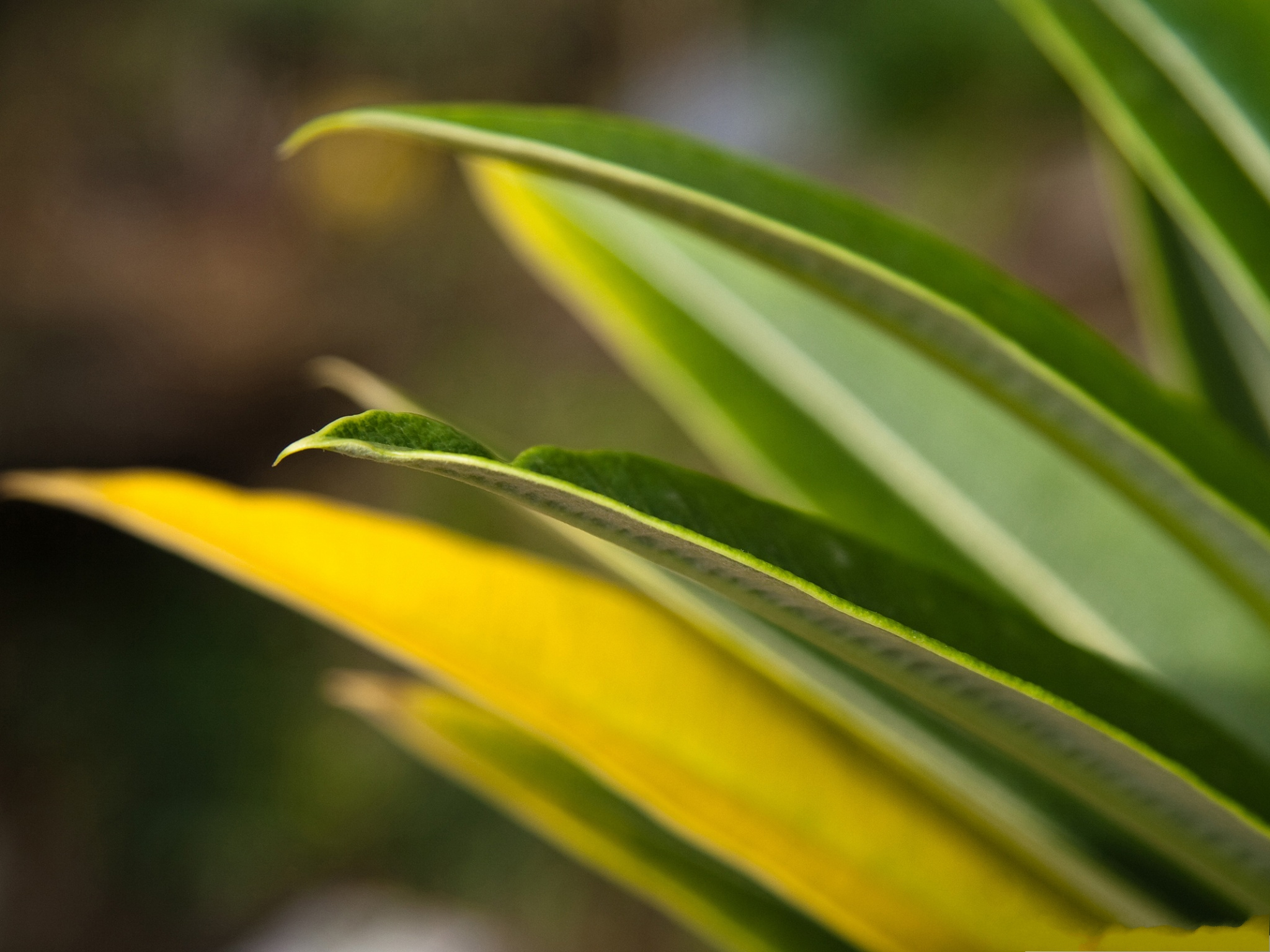 click to free download the wallpaper--Plant Leaves Bokeh, Green Plants Curled Up at the Edge, Macro Focus 2048X1536 free wallpaper download