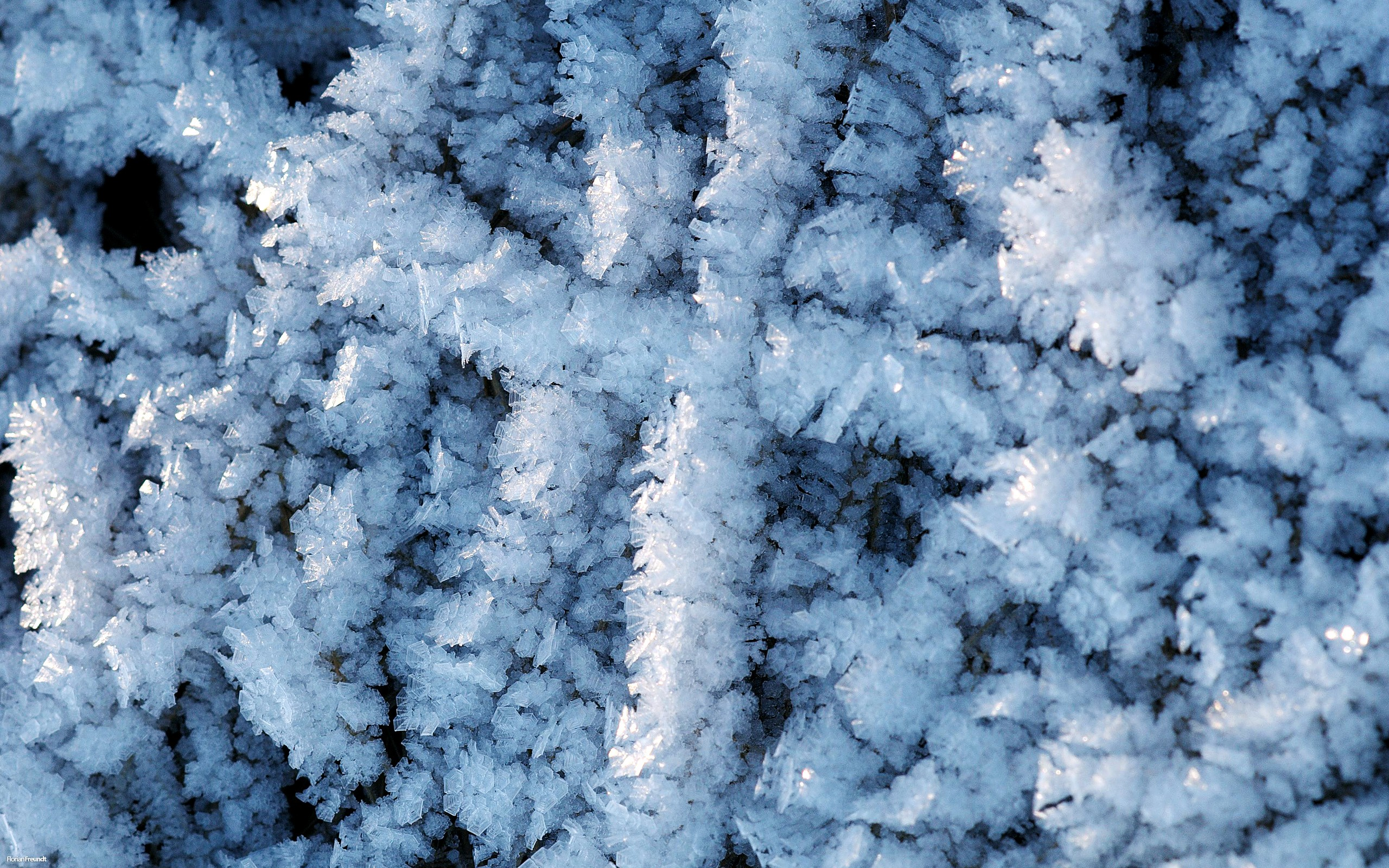 Snow Is Beautifully Decorating The Plants What An Attraction Can Be Warm And Approachable Natural Scenery Wallpaper