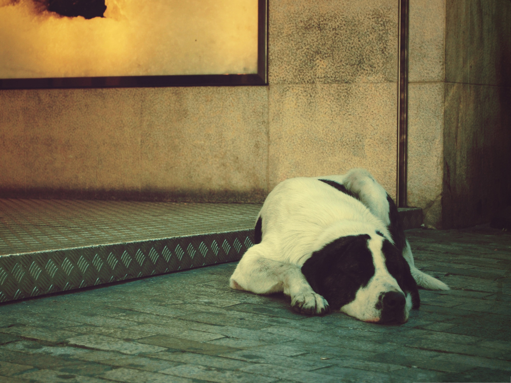 click to free download the wallpaper--Swiss Mountain Dog, Lonely Puppy Lying on Flat Surface, Poor Look 2048X1536 free wallpaper download