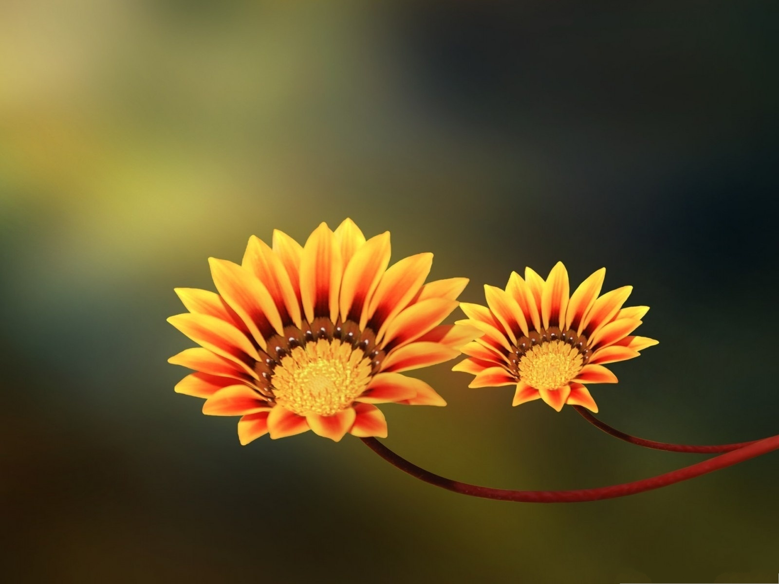 click to free download the wallpaper--Two Flowers Picture, Shinning Orange Flowers on Green Background 1600X1200 free wallpaper download