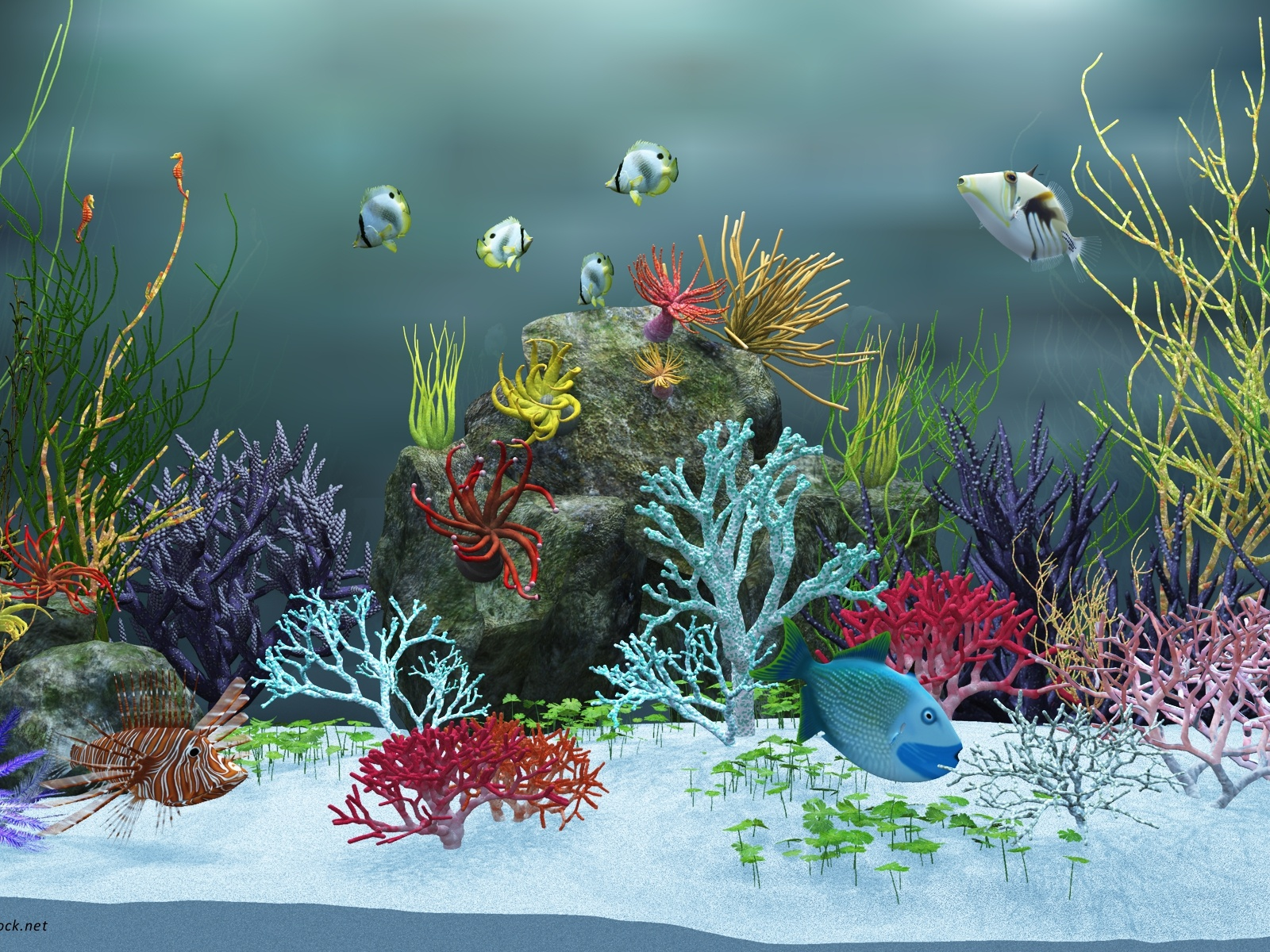 Underwater World Post, Various Fishes Are Swimming, Colorful Sea Plants, a Clean World 1600X1200 free wallpaper download