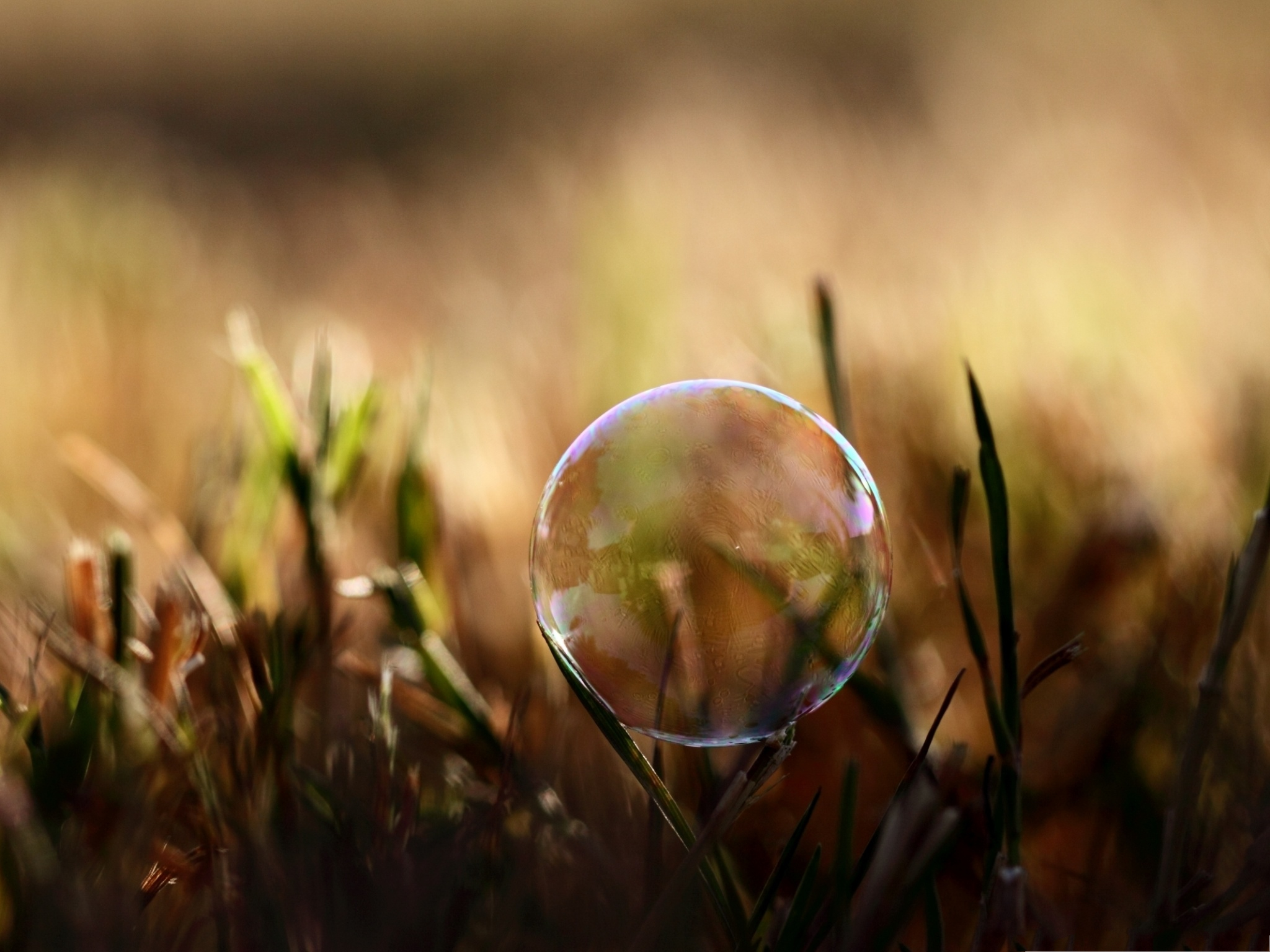click to free download the wallpaper--Wallpaper Free Computer, Soap Bubble On Grass, Clean and Fresh Scene 2048X1536 free wallpaper download