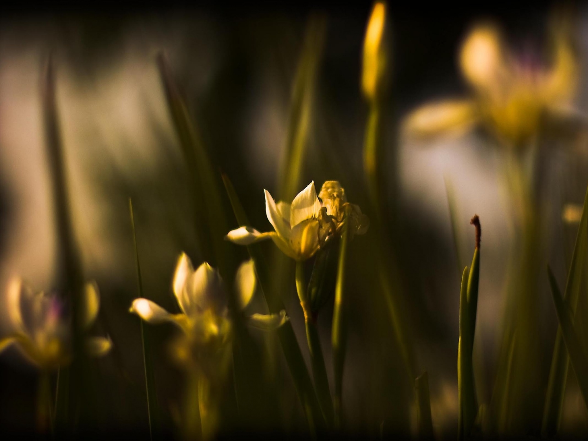 click to free download the wallpaper--Withered Yellow Flowers, Blooming Flowers and Green Stamen, Amazing Scene 2048X1536 free wallpaper download