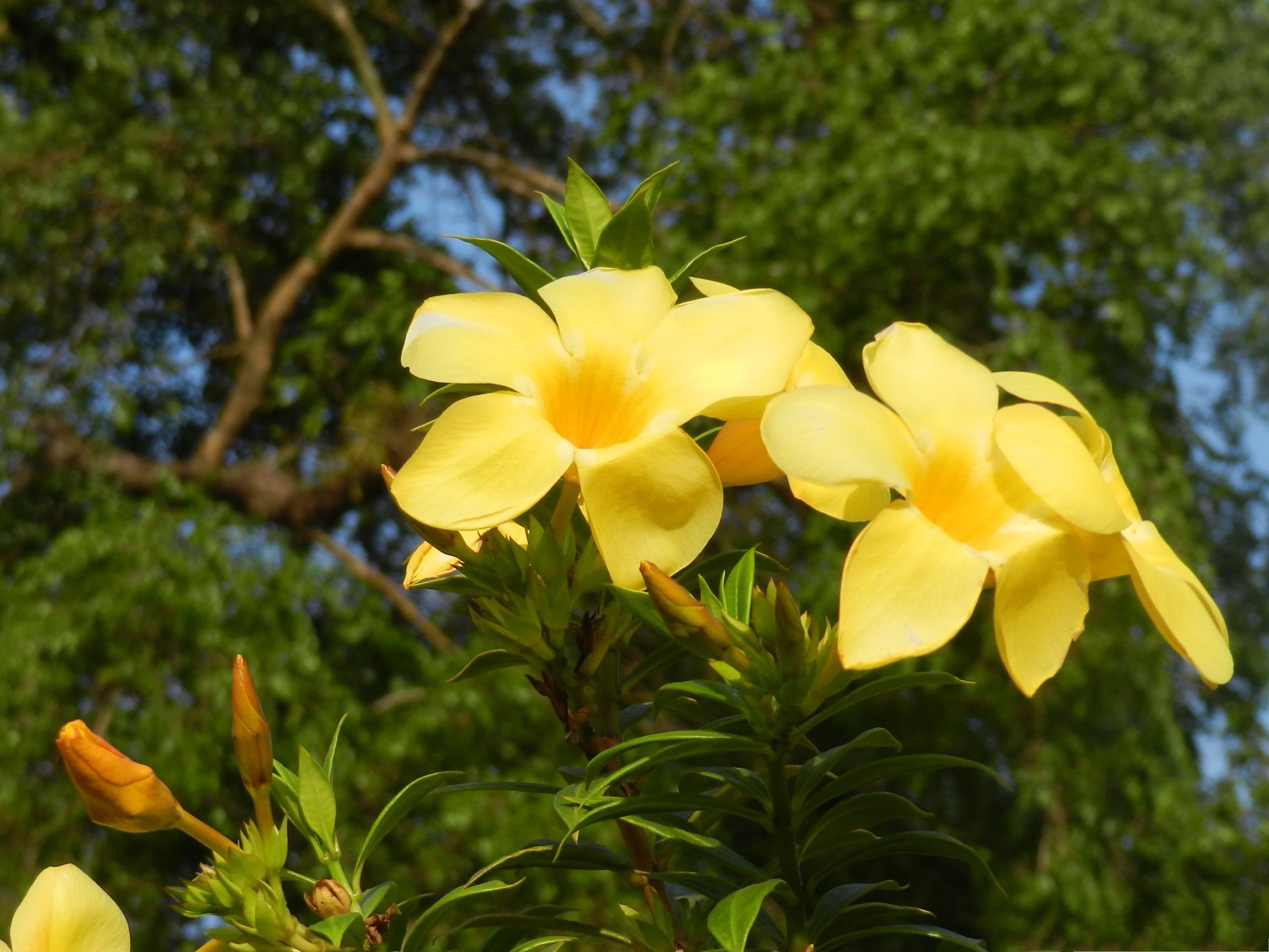 click to free download the wallpaper--Yellow Flowers Image, Tiny and Beautiful Flowers Around Tall Green Tree, Both Impressive 2560X1920 free wallpaper download