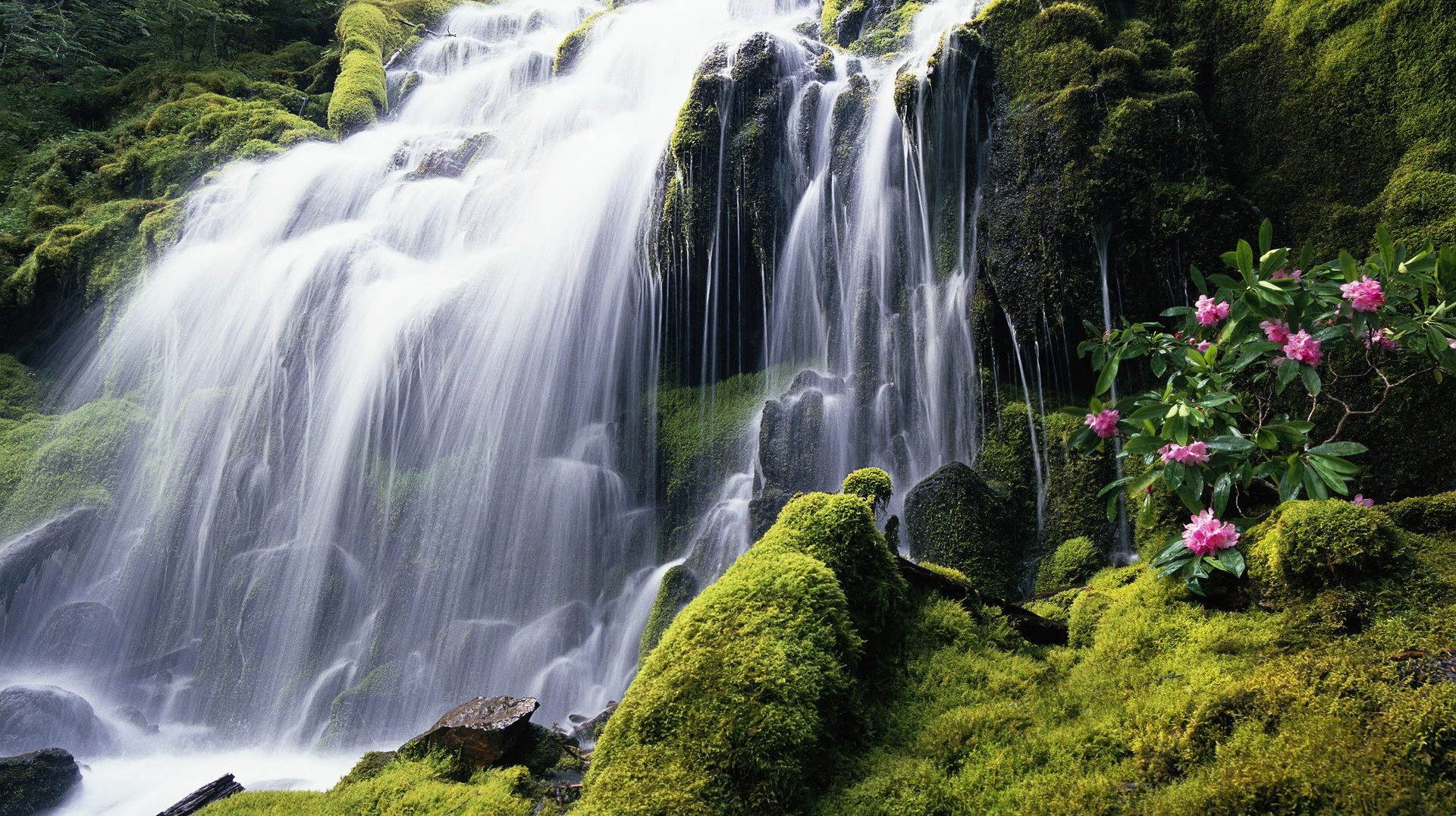 click to free download the wallpaper--beautiful nature pictures - A White Waterfall, the Plants Alongside Are Never Thirsty 1920X1080 free wallpaper download