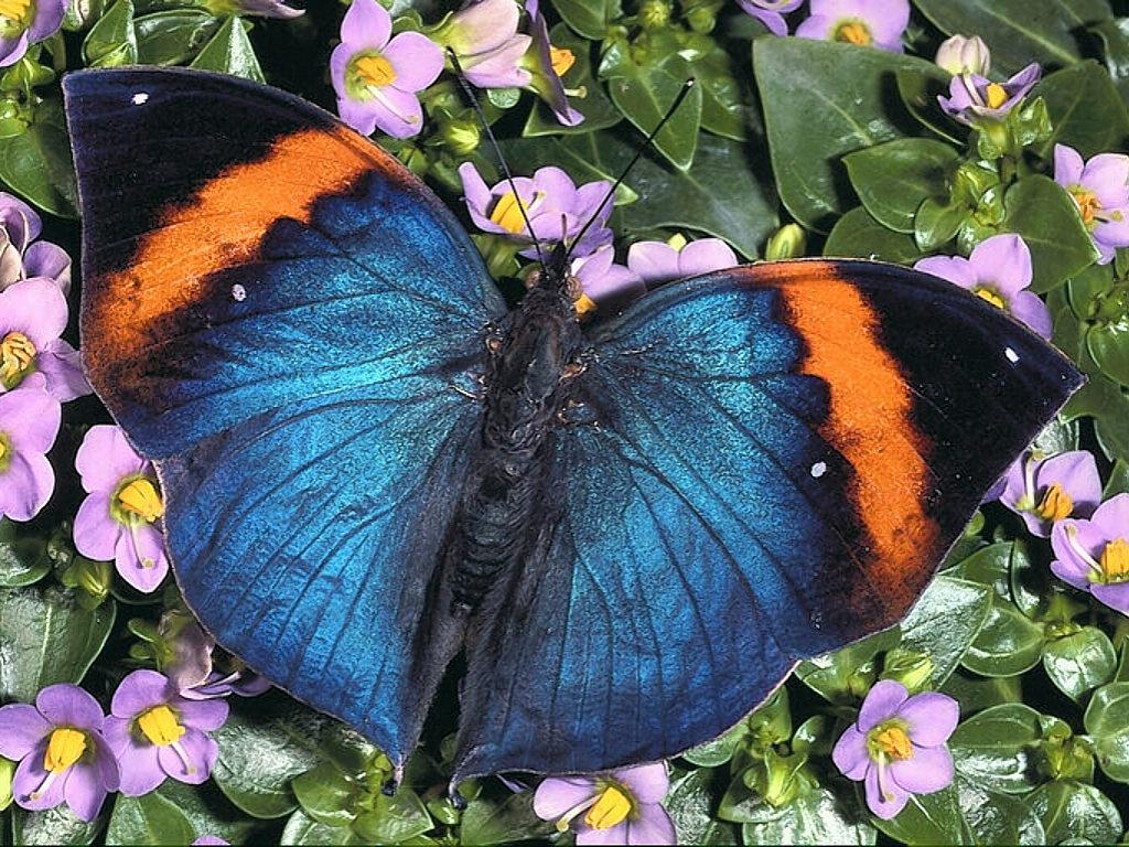 Butterfly On Flower  Free Wallpaper World