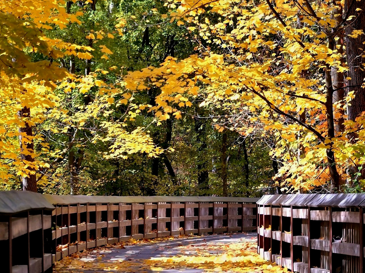 free wallpaper of natural scenery of autumn free