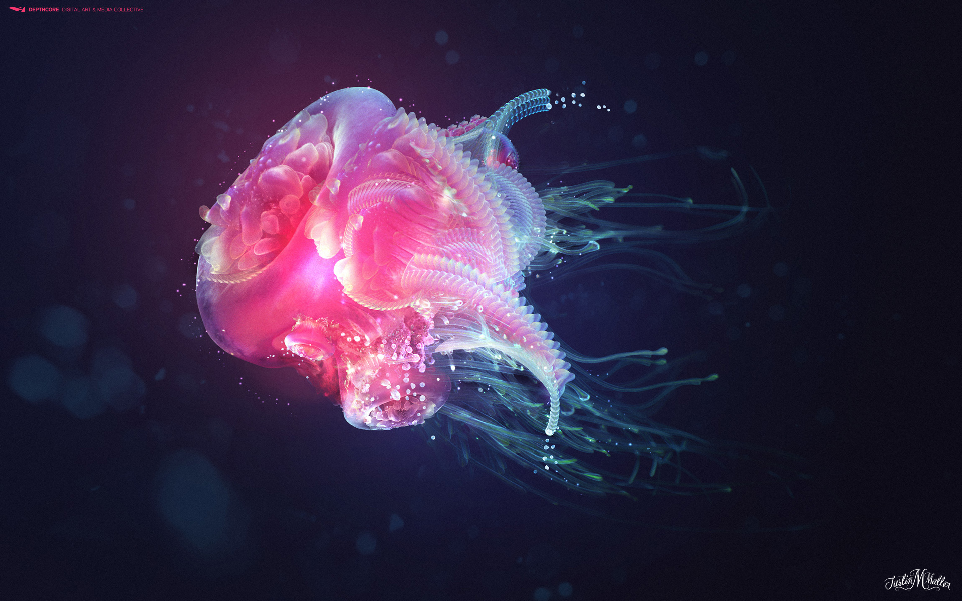 jelly fish wallpaper 734158