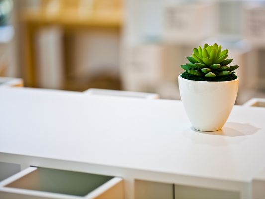 click to free download the wallpaper--3D Computer Background, Green Plant on White Desk, Generating Fresh Air
