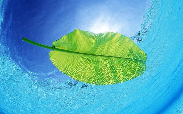 A Floating Leaf, Texture is Reflected, Incredibly Clear and Be Likely to Go Everywhere - HD Beach Wallpaper